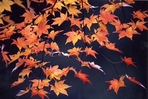 丹波渓谷紅葉