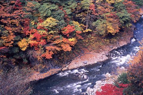 丹波川の秋
