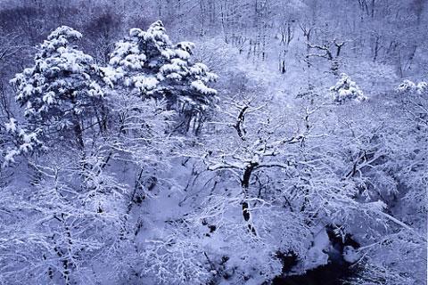 柳沢渓谷の雪化粧