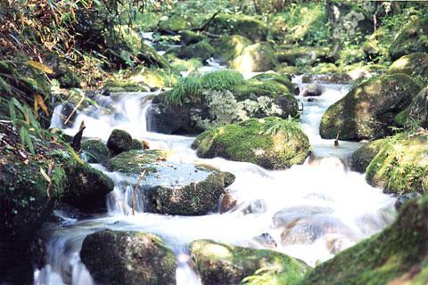 一ノ瀬川本谷の上流